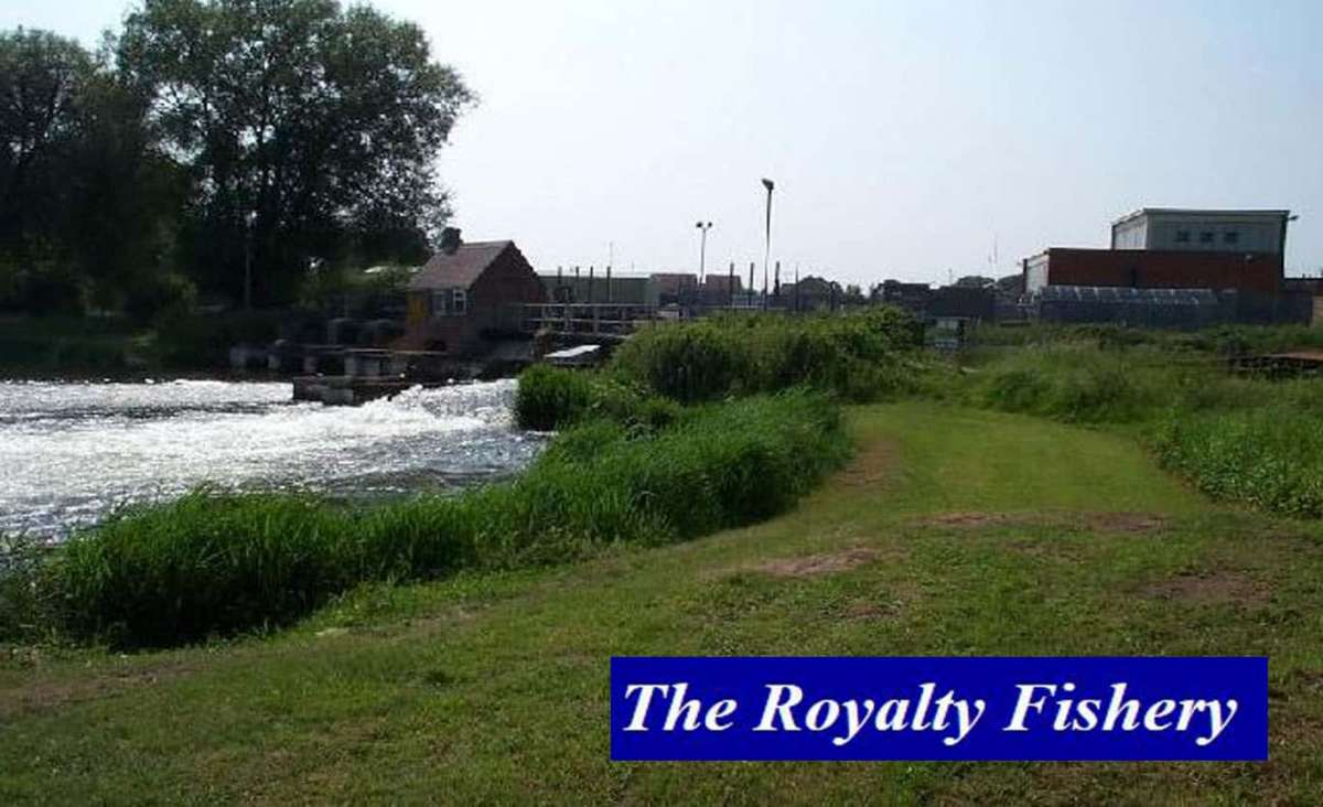 Royalty-fisheries-2-copy