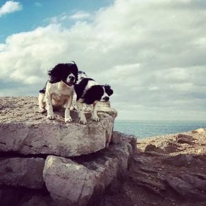 Dog friendly holiday cottage in Dorset