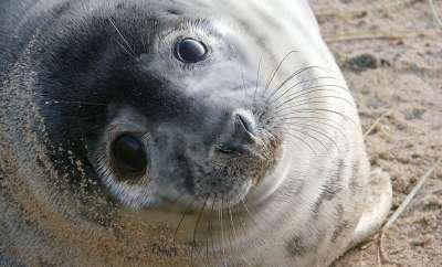 Seal Watching in Norfolk